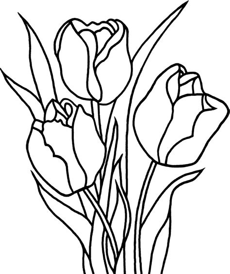 tulip flower coloring pages getcoloringpagescom