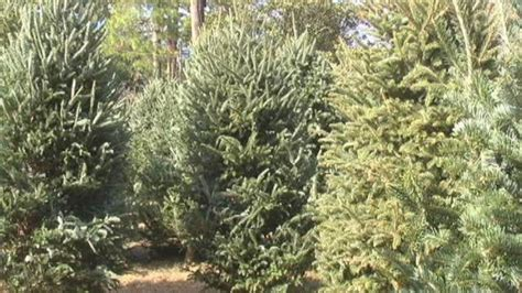 christmas tree permits on sale throughout northern nevada
