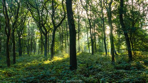 forest green forest green photography wallpaper