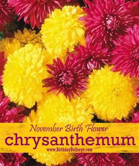 november flower november birthstone happiest and wealthiest month of the year