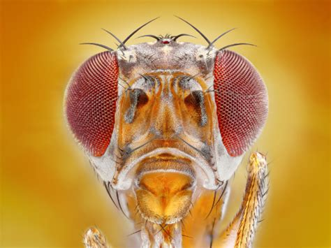 why do i have fruit flies in my bathroom fruit flies invading your worm bin we can help