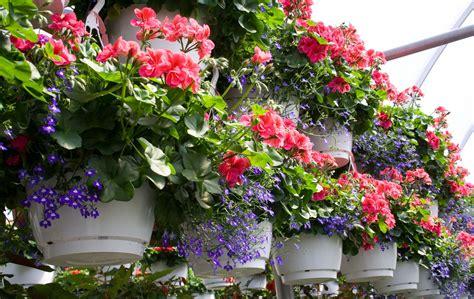 bunga gantung tahan panas  hujan
