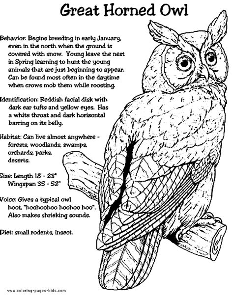 Horned Owl Coloring Page | owls coloring pages and sheets can be found in the owls