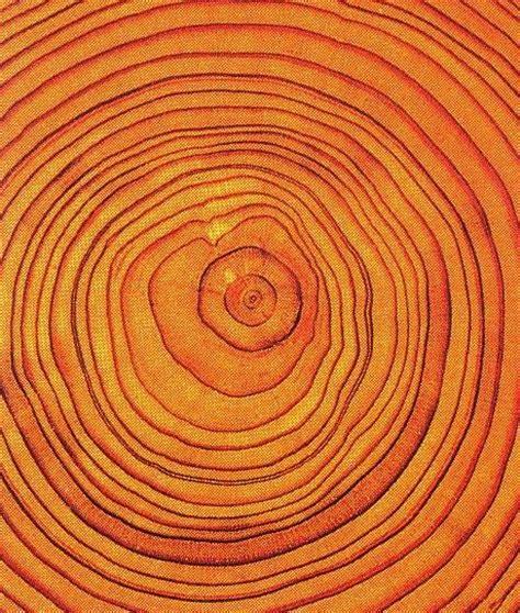 definition of pattern in nature 25 best ideas about orange pattern on pinterest fruit