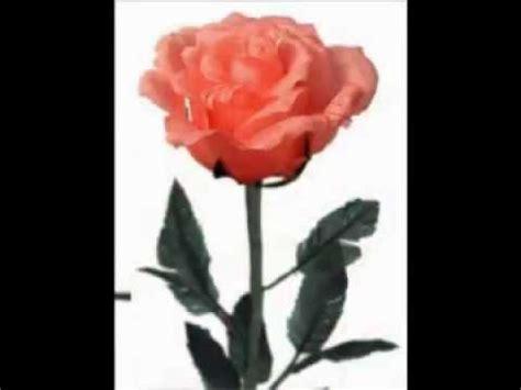 imagenes de rosas q se muevan postales de flores animadas youtube