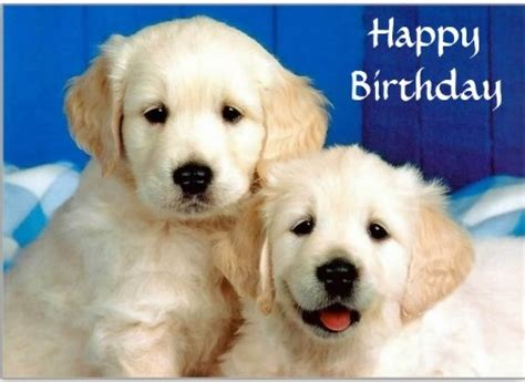 birthday puppies birthday wishes with puppies page 6
