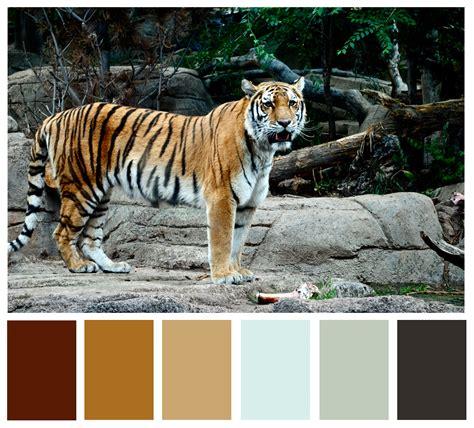 tiger colors wan 183 der 183 lust tiger fur color scheme