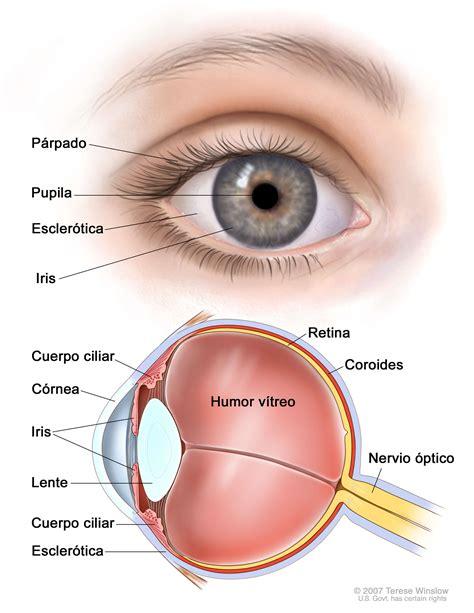 imagenes de ojos vacanos melanoma ocular ojo versi 243 n para pacientes national