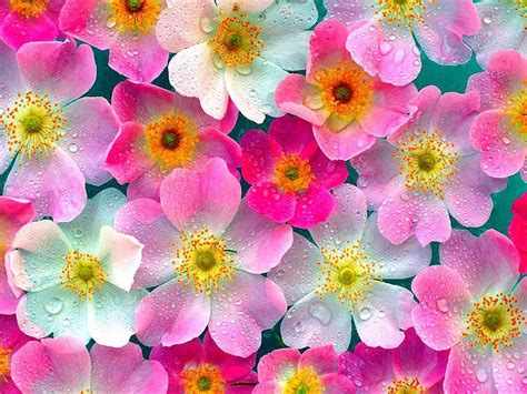 wallpaper with flowers wallpaper flowers wallpapers