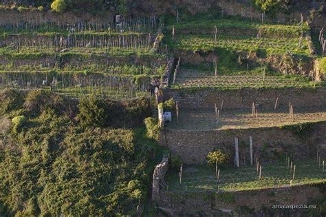 terrazzamenti liguri corniglia guide turistiche liguria