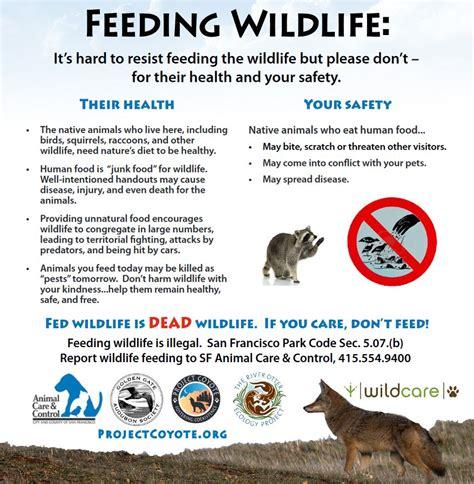 dont feed wildlife wildcare