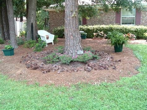 Landscape Ideas Around Pine Trees Pine Tree Landscaping And Pine On