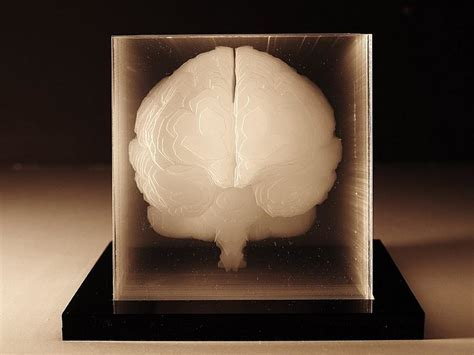 Human brain acrylic sculpture by Northup.   Design Is This