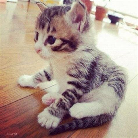 i love cats cute cat kitten pictures cute cat cute cat i love you cats are so cute pinterest