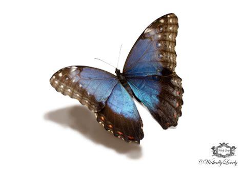 schmetterling 3d 4 3d butterfly designs