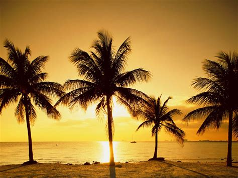 palm tree wallpaper wallpapers palm trees wallpapers