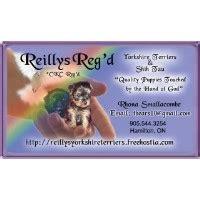 shih tzu rescue toledo ohio terrier breeders in ontario freedoglistings