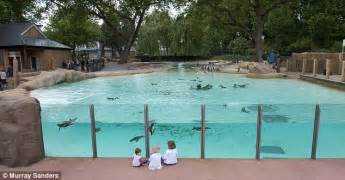 Empty Nest House Plan london zoo unveils new penguin pool daily mail online
