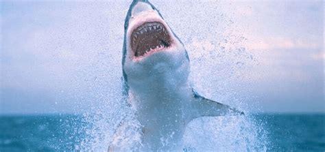 el gran tiburon blanco es mejor conocido por su papel en