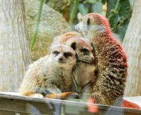 animal pictures best animal attractions around melbourne melbourne