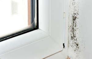 Enlever Humidité by Comment 233 Liminer Les Moisissures