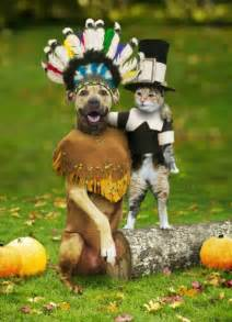 dogs thanksgiving no bones about it keep pets safe this thanksgiving