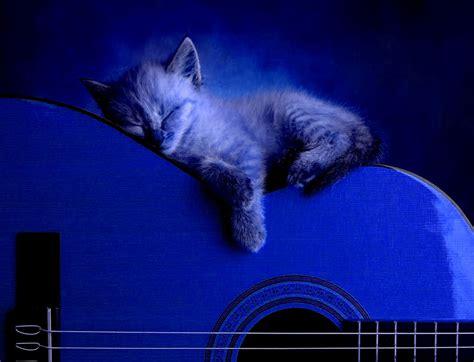 cat guitar wallpaper cute cat sleeping at guitar wallpaper wallpaper gallery