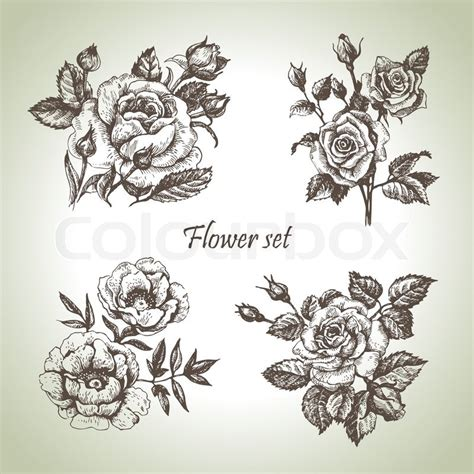 floral set hand drawn illustrations of roses stock
