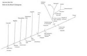 cladogram worksheets abitlikethis