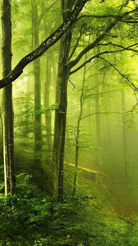 wallpaper iphone 6 forest beautiful green forest iphone 6s wallpapers hd