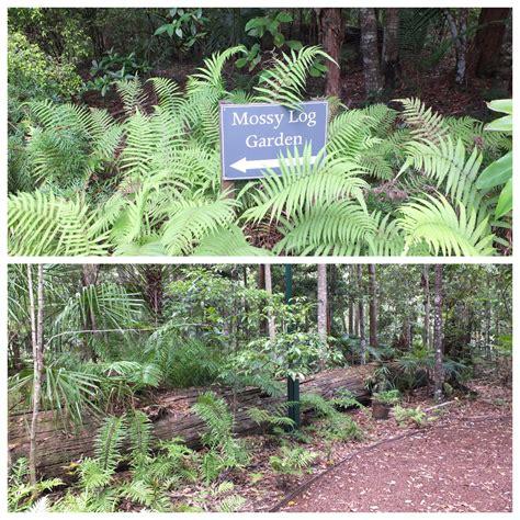 Maroochy Regional Bushland Botanic Gardens Brisbane Maroochy Botanic Gardens