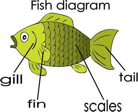 diagram of fish fish parts diagram wiring diagram schemes