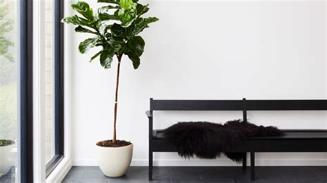 indoor plants    care