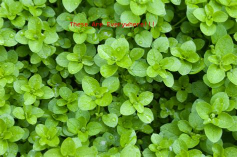 how to kill weeds in flower beds kill weeds in flower bed bedding sets