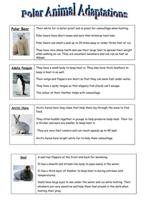 Adaptation Worksheet by Animal Adaptations Worksheets Wiildcreative
