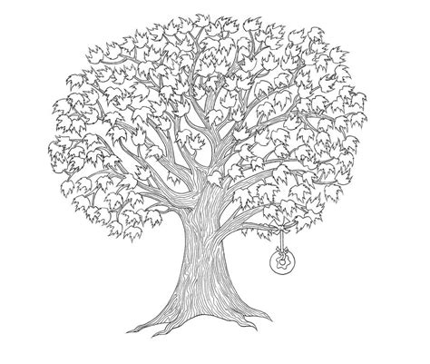 coloring page of maple tree children s book the magic maple tree goodies