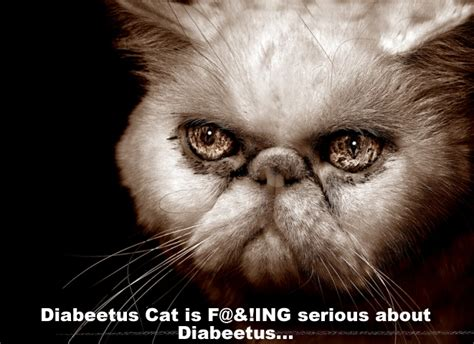 Diabeetus Cat Meme - diabeetus cat picture ebaum s world