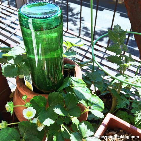 tutorial beer bottle watering globe  houseplants