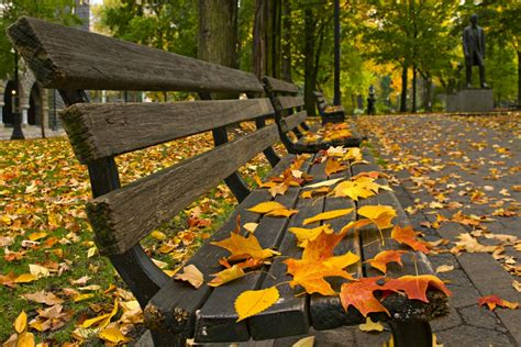 on park bench leaves on a park bench unconfirmed breaking news a