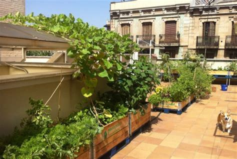 imagenes de jardines urbanos dejamos nuestros trabajos remunerados para crear huertos