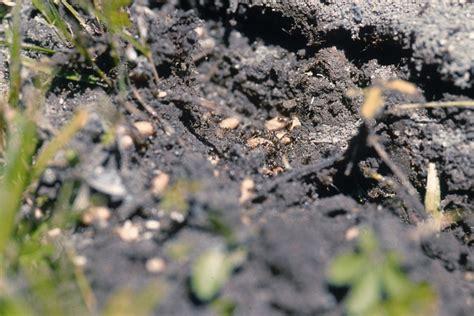 Ameisen Im Blumentopf In Der Wohnung by Ameisen Im Blumentopf Ameisen Bek Mpfen Was Hilft Gegen