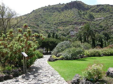 jardin botanico gran canaria jard 237 n bot 225 nico canario viera y clavijo wikipedia wolna