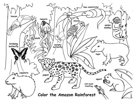 amazon rainforest animals coloring pages get coloring pages