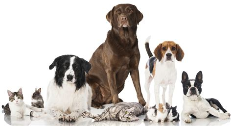 Build to Suit – Customizing Your Animal Shelter Plans ... Groupings Of Animals