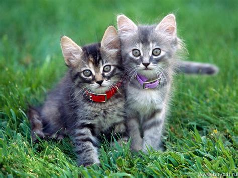 and cat cats cats wallpaper 9473856 fanpop