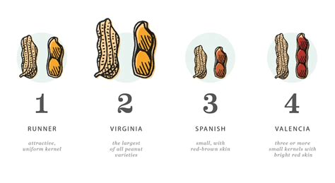 types of peanuts texas peanut producers board