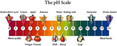 Hotr Poll Which Southern teach soap view topic ph ranges
