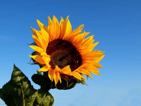 black sunflower seeds to horses 18 of our favorite flowers our