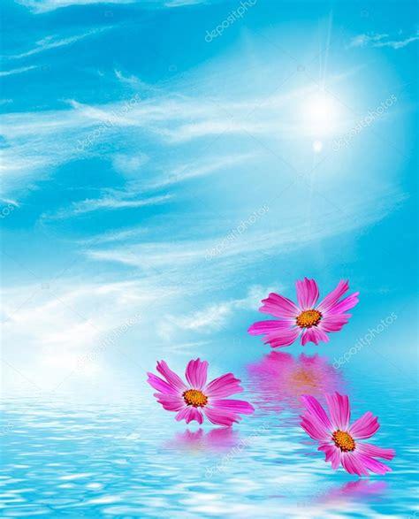 bloemen en wolken kosmos bloemen op een achtergrond van blauwe hemel met