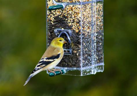 backyard bird feeding wshg net backyard bird feeding makes a difference featured the garden february 6 2015